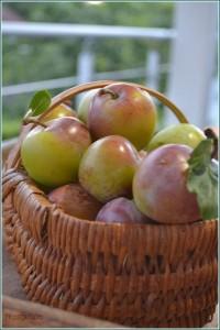 les fruits du mois d'aout