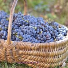 raisins_automne-15_2