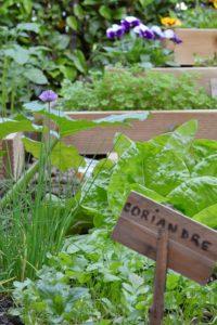 presentoir pour fleurs comestibles